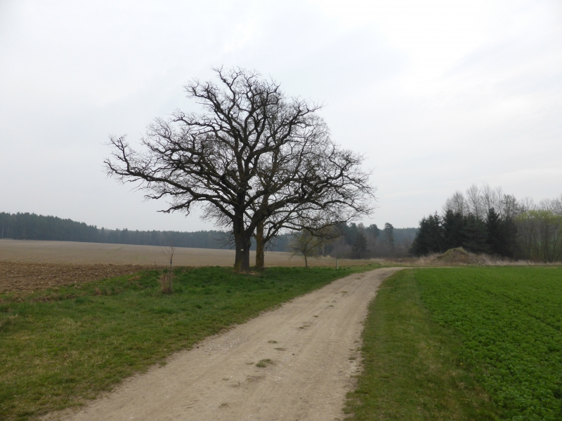 g140405010-Mapovani terenu na Kobylky