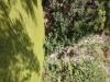g180908018-VIPrahle duse 2018, Jinolice