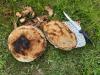 g200510008-Ve-Sklenkach-na-koronavirovych-prazdninach-orezany-spaleny-chleba
