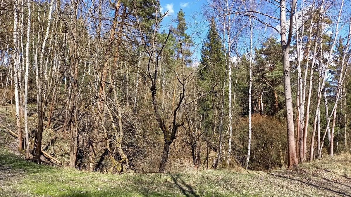g210423025-Dubnove-najizdeni-Kobylek-2021