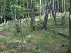 g190803031-Frantiskova-bludicka-zidovsky-hrbitov-u-Krasne-Lipy