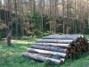 g190922003-S-Kobylkama-v-Luzickych-na-kolech-v-Narodnim-parku-Ceske-Svycarsko-kurovcova-kalamita