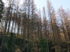 g190922004-S-Kobylkama-v-Luzickych-na-kolech-v-Narodnim-parku-Ceske-Svycarsko-kurovcova-kalamita